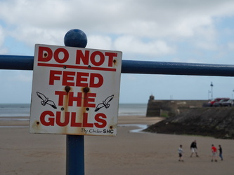Saundersfoot - Do not feed the gulls