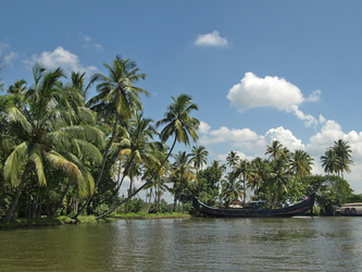 Palmenidylle in den Backwaters